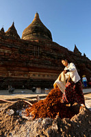 Bagan Mingalar Zedi girl pouring recycled crushed brick for temple restoration